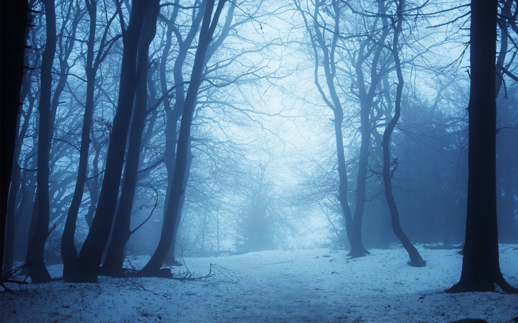 winter-forest-twilight